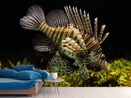 Photo Wallpaper Lion fish