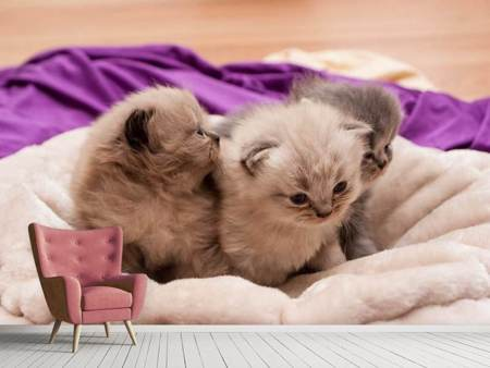 Photo Wallpaper Kitten trio to fall in love