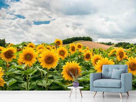 Photo Wallpaper Landscape with sunflowers