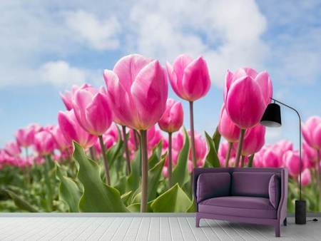 Photo Wallpaper Tulip field in pink