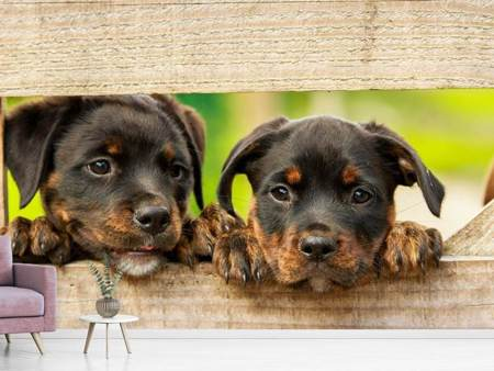 Photo Wallpaper 2 Rottweiler puppies