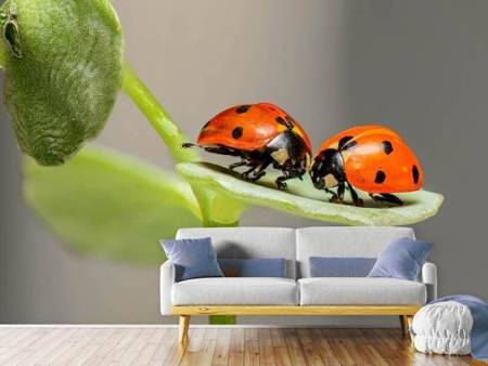 Photo Wallpaper 2 ladybirds