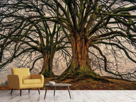 Photo Wallpaper Ghostly trees
