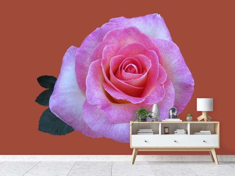 Photo Wallpaper Rose in pink XXL