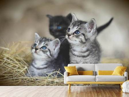 Photo Wallpaper Kitten trio