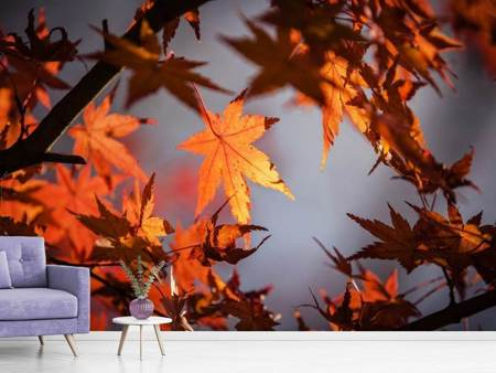 Photo Wallpaper Maple leaves in autumn