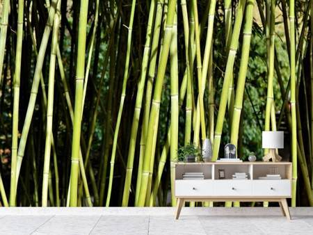 Photo Wallpaper Fresh bamboo