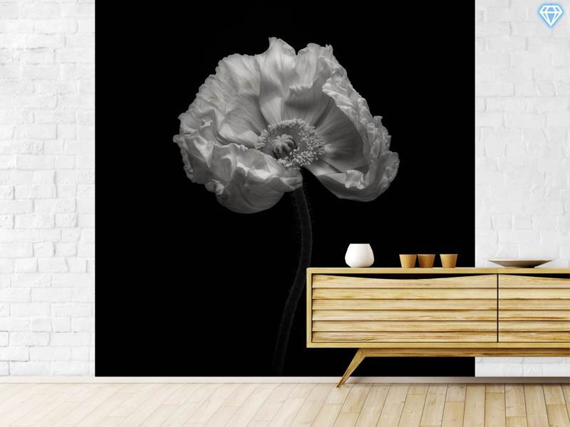 Papier peint photo Poppy A