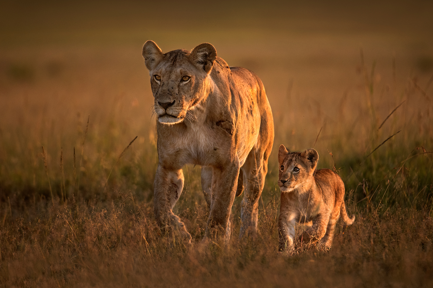 Photo Wallpaper Mom Lioness With Cub