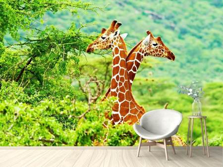 Papier peint photo Amour de girafes