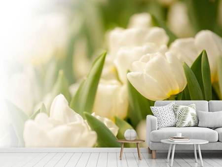 Photo Wallpaper Tulips Perspective