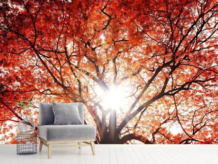 Photo Wallpaper Light Of Autumn