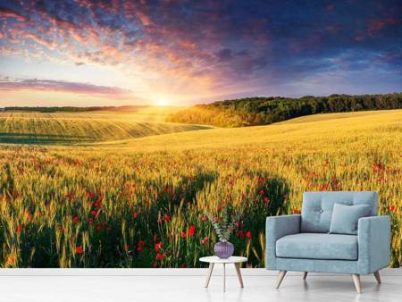 Photo Wallpaper A Flower Field At Sunrise