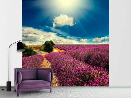 Photo Wallpaper The Lavender Valley