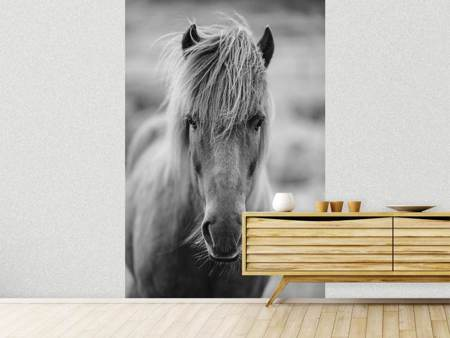 Photo Wallpaper Horse Being At The Corridor