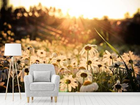 Photo Wallpaper Daisies At Sunset