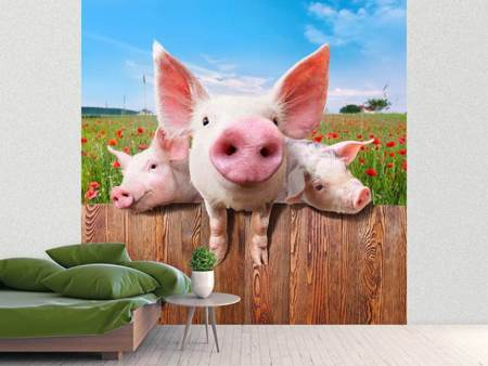 Photo Wallpaper Pig In Luck